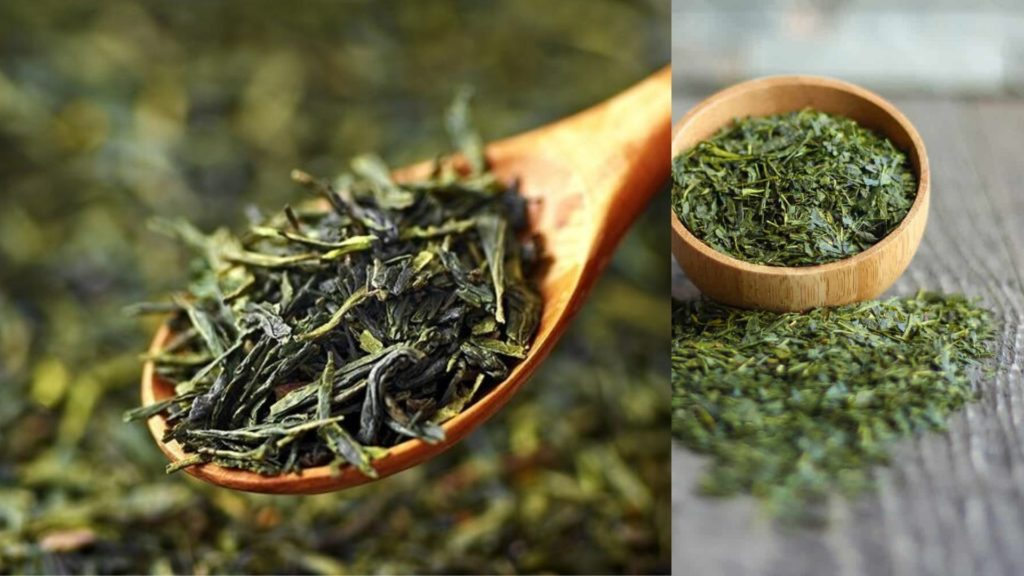 Green Tea Myths, benefits and Facts - Is Green Tea Healthy?